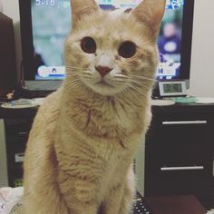 早朝、キャッツ目覚ましが発動した。 #大阪 #たけちゃん家 #眠い #5時起き #今から出勤です #thinderbird #サンダーバード #猫 #cat #kawaii #morningmayuxvon2016/03/17 05:58:38