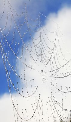 spider web and blue sky