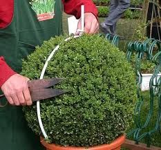 Image result for types of topiaries