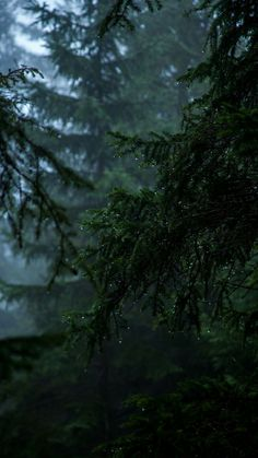 Photo by Jonathan Klok on Unsplash Dark Green Aesthetic, Nature Aesthetic, Rain Pictures, Rain Wallpapers, Mystical Forest, Arte Obscura, Slytherin Aesthetic, Nature Wallpaper, Aesthetic Pictures