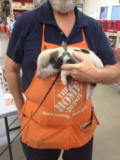 11 reasons why you need a micro pig