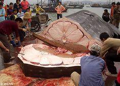 whalle ballena, sea food