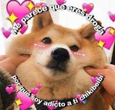 Read 🐾 cuarenta from the story ♡̷̷ꦿmemes soft by caramelcrime (⠀) with reads. Cute Love Memes, Funny Love, Memes Lindos, Tumblr Love, Love Phrases, Love Stickers, Avengers Memes, Stupid Funny Memes, Wholesome Memes
