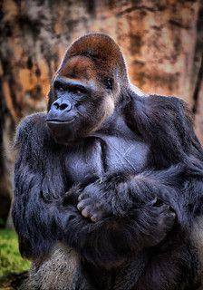 Smirk Animals Animals Wild African Animals