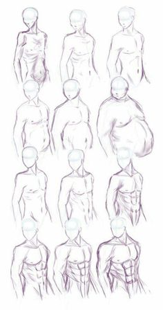 male body types | fat and muscle studies