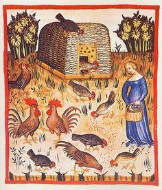 Tacuinum Santiatis Codex Vindobonensis