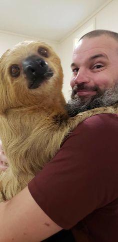 Two Toed Sloth, Sloths, Lemur, Sloth