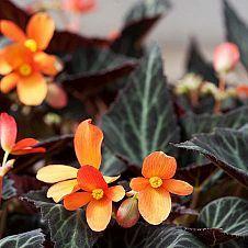 Hometalk :: Beautiful plants! :: Four Season Nursery & Landscaping (Donna)'s clipboard on Hometalk
