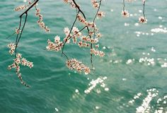 untitled by 侧脸君 on Flickr.