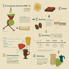 Coffee infographic about processing cherry beans to become coffee grounds. #coffee, #coffeebean, #coffeeprocess, #infographic, #infographics