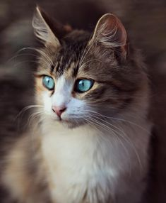 This cat is so beautiful ❤️ Cute Cats And Kittens, Baby Cats, Litter Box, Fur Babies, Cute Animals, Pets, Positive Reinforcement, Kitty Kitty, Therapy