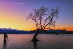 Have you ever wonder how big is that famous lonely tree at Lake Wanaka? I've asked one of my shooting buddy to hold his ground for 30 secs. This is my 3rd time to visit this lake and it always gives you a different light specially this glowing warmth throwing from the back. Hopefully next time I can capture this with a calm water either sunrise or sunset.  Auckland Photographer © 2014 Danskie Dijamco Photography  Check me also at my Facebook Page