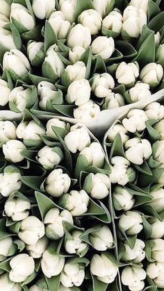 Purple Tulips, White Tulips, Tulips Flowers, Orange Flowers, Planting Flowers, Wonderful Flowers, Beautiful Flowers, Tulips For Sale, Frühling Wallpaper