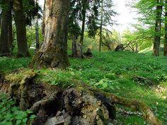 Wildpark - Edersee