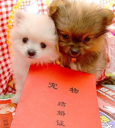 Dogs getting married with Chinese registration