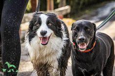 Luke Skywalker, Dogs, Animals, Spain, Pet Dogs, Animales, Animaux, Doggies, Animal