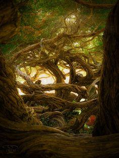 Magic Tree II by Pe Pe on 500px Golden Gate Park, San Francisco, CA