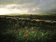 Sicily, Italy, Photos - National Geographic#/sicily-agricultural-past_3148_600x450.jpg?utm_source=Facebook&utm_medium=Social&utm_content=link_fbt20150621sicilyphotos&utm_campaign=Content#/sicily-agricultural-past_3148_600x450.jpg?utm_source=Facebook&utm_medium=Social&utm_content=link_fbt20150621sicilyphotos&utm_campaign=Content#/sicily-agricultural-past_3148_600x450.jpg?utm_source=Facebook&utm_medium=Social&utm_content=link_fbt20150621sicilyphotos&utm_campaign=Content