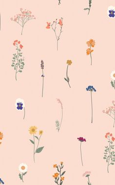 Brighten up a boring wall with some colourful, trendy decor. Our Florist Pink wallpaper is a pressed flower-inspired design that repeats in a seamless pattern across as many walls as you want (or it makes a cute stand-alone accent wall, too!) The Summery colours of the different flowers pop against the peachy pink background. Butterfly Wallpaper, Pink Wallpaper, Pattern Wallpaper, Vintage Floral Wallpapers, World Map Wallpaper, Pink Home Decor, Pressed Flower Art, Different Flowers, Hand Illustration