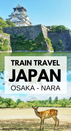 Travel Japan. Train travel ideas for Osaka to Nara. Best places to visit in Japan. Best things to do in Japan like osaka castle, nara deer park, and todaiji temple with great buddha. Outdoor travel destinations, backpacking Japan itinerary travel tips on a budget, trip planning, where to go on vacation, holiday. Culture travel, beautiful places, asia, for world bucket list, wanderlust inspiration, adventure. #flashpackingjapan