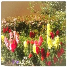 Spring Flowers!!!