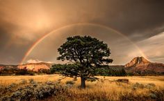 "Weather the Storm  Waiting for a storm to pass in Utah's Zion National Park paid off for Your Shot member RJ Hooper, who submitted this image of a rainbow stretched across a golden, post-tempest sky. ""A brutal autumn thunderstorm rocked the higher elevations of Zion,"" he says. ""I hunkered next to some bushes to wait out the storm, [and] it paid off!"" PHOTOGRAPH BY RJ HOOPER, NATIONAL GEOGRAPHIC YOUR SHOT"