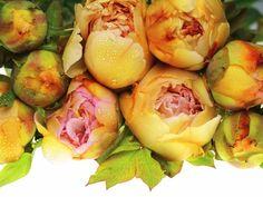 Pink Lemonade Tree Peony, Leblum