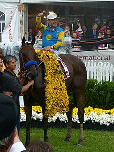 American Pharoah (foaled February 2, 2012) is an American Thoroughbred racehorse who won the Triple Crown on June 6 2015. He's pictured here in his Black-eyed Susan blanket after winning the Preakness in May 2015