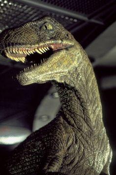 jurassic park velociraptor | Jurassic Park - Velociraptor
