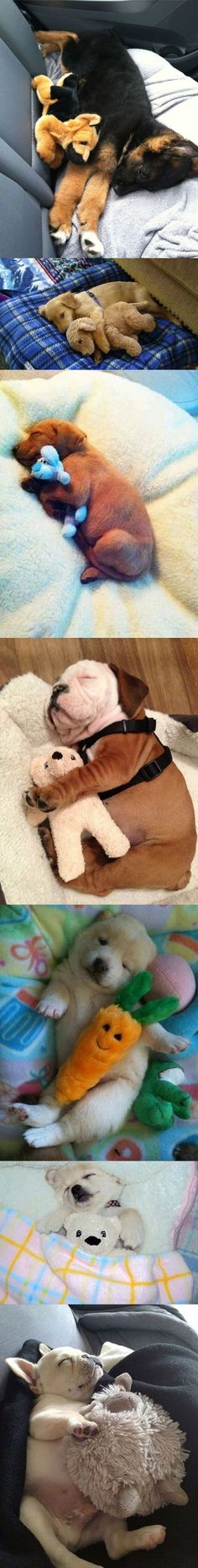 Puppies with their stuffed animals