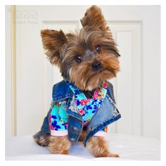 Time for a fashion show!  Mix and match style! 😀 Thank you Kloe @therealkloek  Jean jacket info  www.unitedpups.com/jacket #jeans #denimvest #denim #jeanjacket #fashion #style #maltese #frenchie #shihtzu #poodle #pomeranian #chihuahua #beagle #yorkie #pug #dachshund #jackrussell #corgi #puppy #dog #pet #puppylove #stylishdog #unitedpups #cool #fashionshow #mixandmatch #weeklyfluff