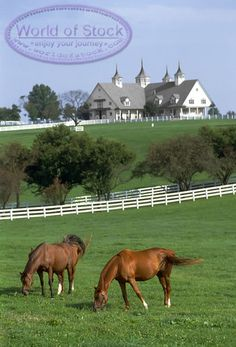 Lexington Kentucky Horse Farm...This is so beautiful, I want a big farm like this, one day I will have one