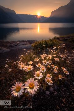 """Minnewanka Lakeside - Pinned by Mak Khalaf Minnewanka Lake near Banff Canada. Wildfires hampered the photography on my recent visit to the Banff area but for this image the diffuse light at sunrise created nice soft highlights for this beautiful bouquet of wildflowers. This is a """"focus stack"""" of about 7 exposures at f/8 blended together to obtain good sharpness from front to back. Because there was a breeze (causing movement in the foreground flowers) the blending work was a real pain…"""