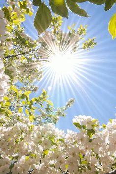 Sunshine Brings New Life.