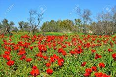 Dry Tree, Red Flowers, Vineyard, Pumpkin, Sky, Art Prints, Plants, Digital Art, Trees