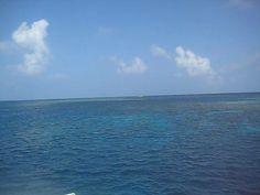 Great Barrier Reef. Video by Caroline Eubanks.
