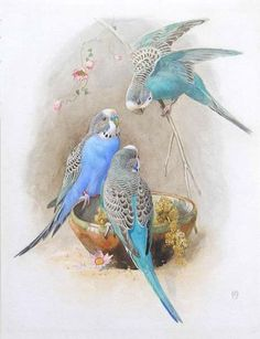 Things of beauty I like to see, Winifred Austen (1876-1964)  - Budgerigars,...