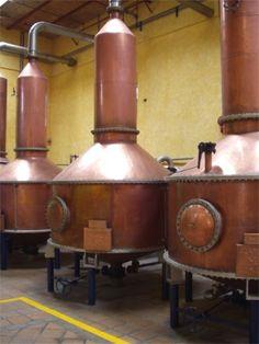 Jose Cuervo Distillery