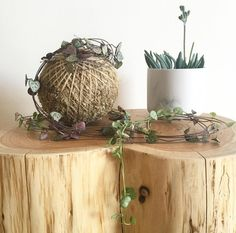 Chain of Hearts Kokedama  Available online.