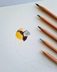 Watercolor bird making process by Studio Sonate Watercolor Bird, Studio, Illustration, Prints, Instagram, Design, Studios, Illustrations