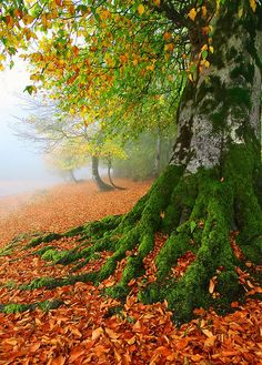 """coiour-my-world:  """"ROOTS & LEAVES by Seyed Mohammad Shamsi  """""""