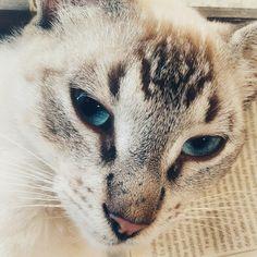 #Photography#Gatos#cats#animales#animals#kittys#Colors#art#art#Nature#drawing#Draws#picoftheday#picsart#animalslover#catsofinstagram#cat_features#cats#meowsandwoofs#meow#meow_beauties#meow_insta#Grey#Gris#sad#Blackandwhite#blacknwhite_perfection