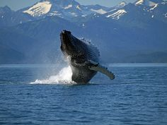 Watching the Way we Watch Whales | Animal Lover | Organic Spa Magazine