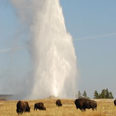 Top wow spots of Yellowstone | Old Faithful | Sunset.com