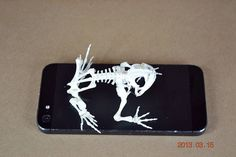 Real toad  skeletonsbest for Study of specimens by missing1981, $30.00