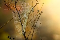 Cobweb, Dew, Nature, Moist, Autumn