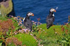 Handa Island, Sutherland