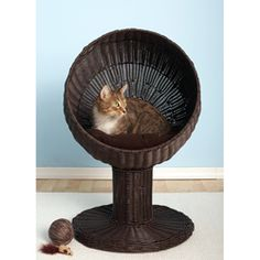 @Overstock - Give your cat somewhere to lounge in style and comfort with this kitty ball bed. This bed is raised off the ground and features a soft coordinating, cotton pillow that your feline is sure to love.http://www.overstock.com/Pet-Supplies/The-Refined-Espresso-Kitty-Ball-Bed/6137801/product.html?CID=214117 Add to cart to see special price