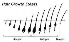 Eyelash growth cycle & biology of hair growth - My Beauty Salon Website Hair Growth Stages, Hair Growth Pills, Hair Growth Cycle, Natural Hair Growth, Natural Hair Styles, Hair Science, Eyelash Extensions Styles, Eyebrow Extensions, Hair Shedding