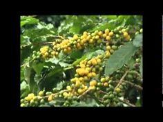 ▶ Agricultura Biodinâmica - Matéria do Globo Rural - YouTube